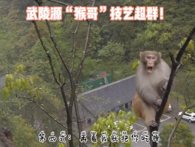 """武陵源""""猴哥""""技艺超群!"""