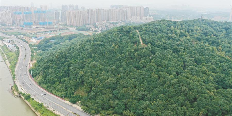 打造城市天然氧吧
