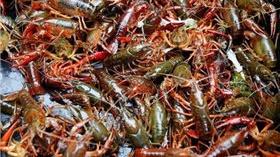 长沙一老板花近200万买口罩,却收到一箱小龙虾