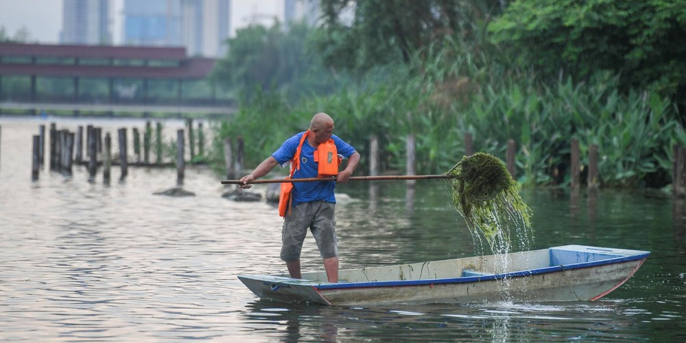 清理水草 保护环境