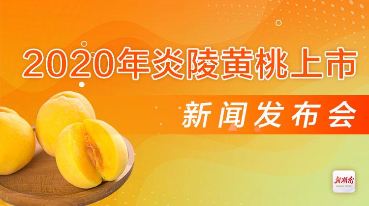 直播回顾>>2020年炎陵黄桃上市新闻发布会