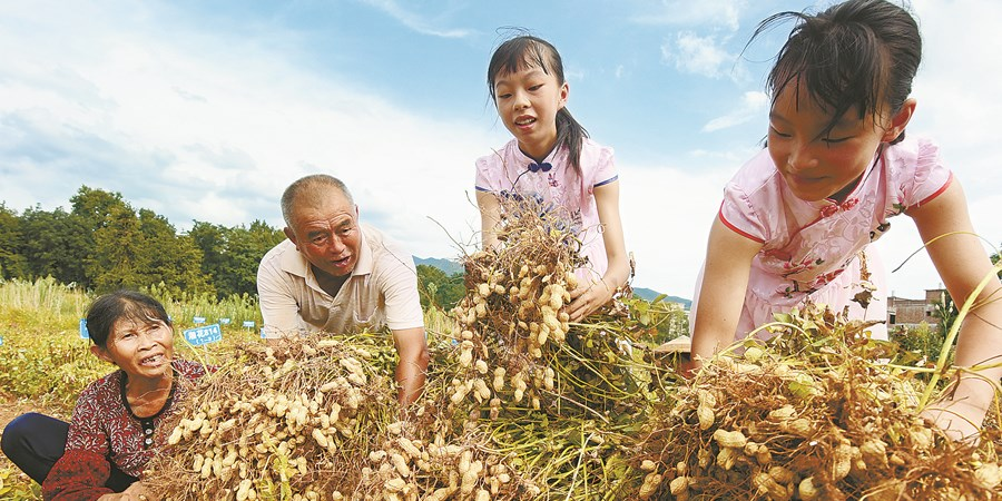 【决胜2020——扶贫印记】油茶产业 助力扶贫