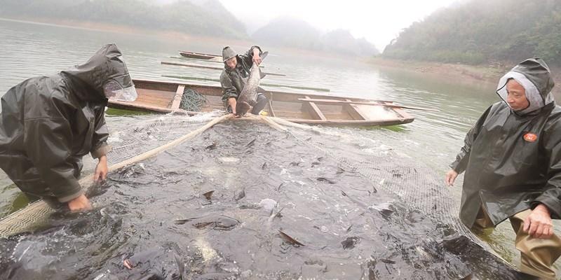 鱼儿肥壮 市场丰盈