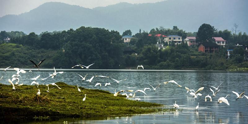 秋日湿地 候鸟纷至