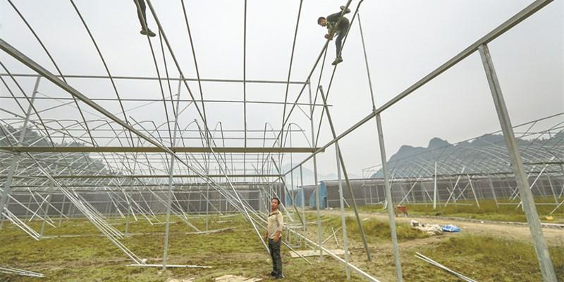 建好大棚 助农致富
