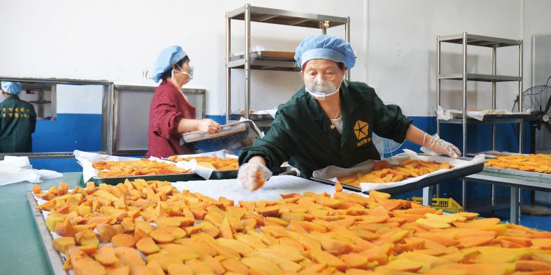 小红薯做成大产业