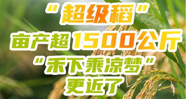 """""""超级稻""""亩产超1500公斤!""""禾下乘凉梦""""更近了"""