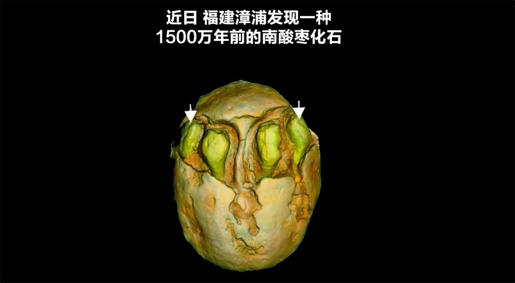 1500万年前的南酸枣长啥样?