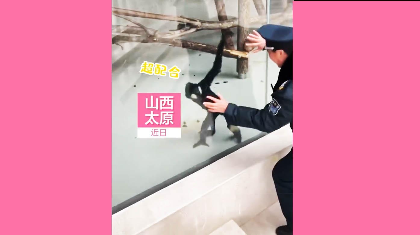 快乐会传染!动物园保安隔窗与猴共舞