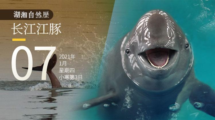 湖湘自然历丨长江中的微笑天使