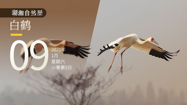湖湘自然历丨云中仙客来
