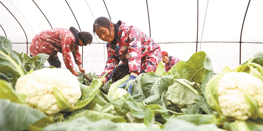 采蔬菜 保供应