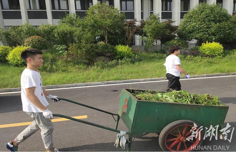 朱华峰参加所在党支部劳动养成志愿服务活动。图片由受访者提供