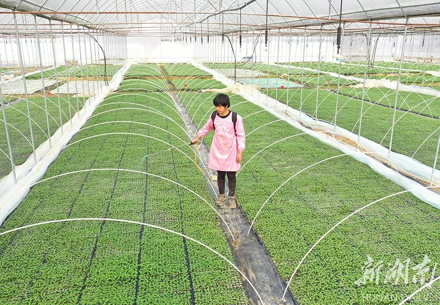 蔬菜育苗备春种 新湖南www.hunanabc.com