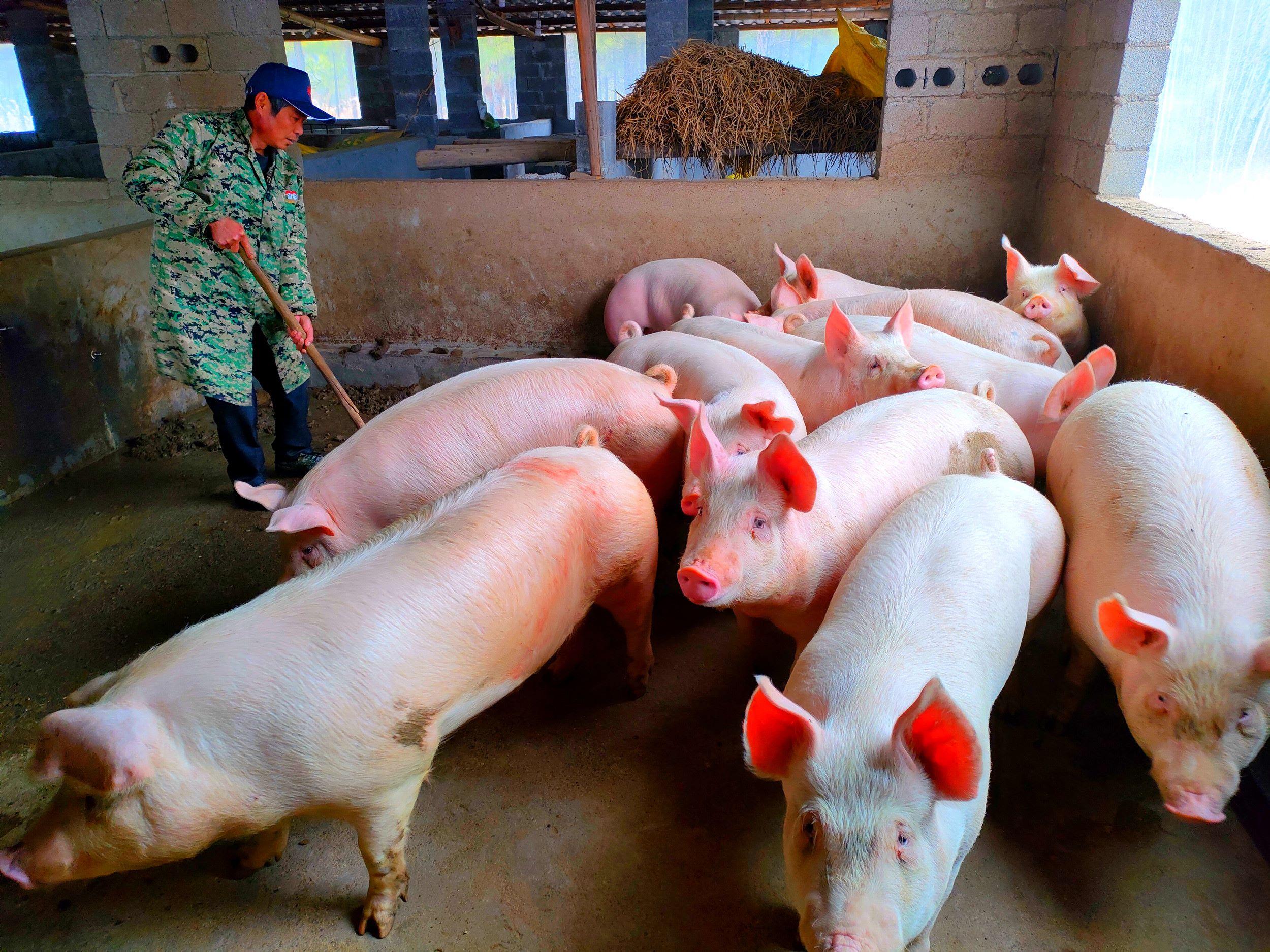 图片新闻  零陵:巧养猪致富 帮村民脱贫 新湖南www.hunanabc.com