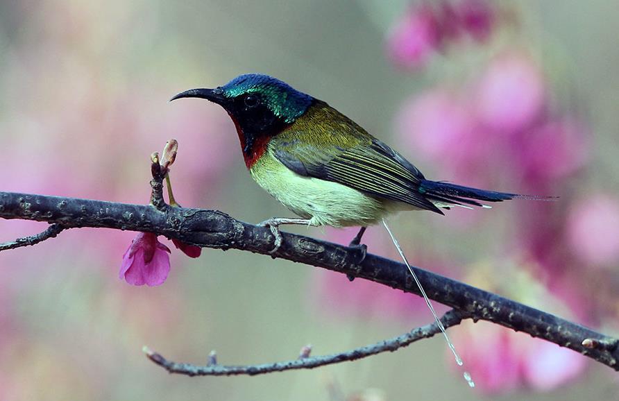 """湖湘自然历丨假如你被这只鸟的""""便便""""击中……"""
