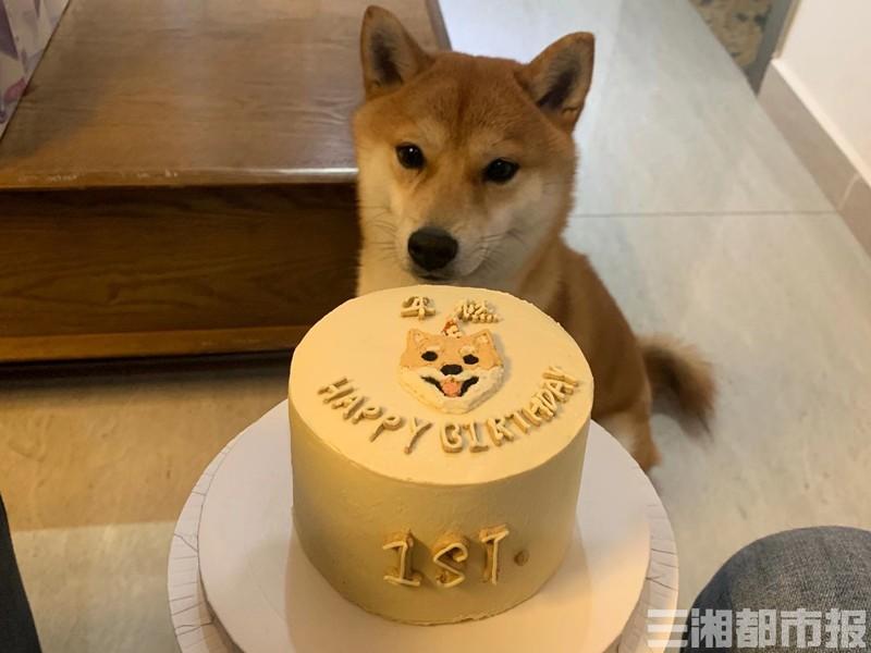 """宠物专属蛋糕渐流行,俘获了""""铲屎官""""的心还是宠物的胃?"""