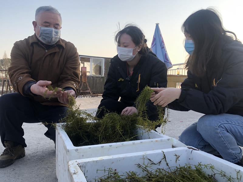 1月19日,于丹与专家团队一起查看刚抵大通湖的水草。杨玉菡 摄