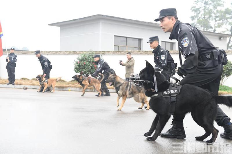 能擒贼会卖萌,警犬萌翻训练场 200余名长沙特警整装开训