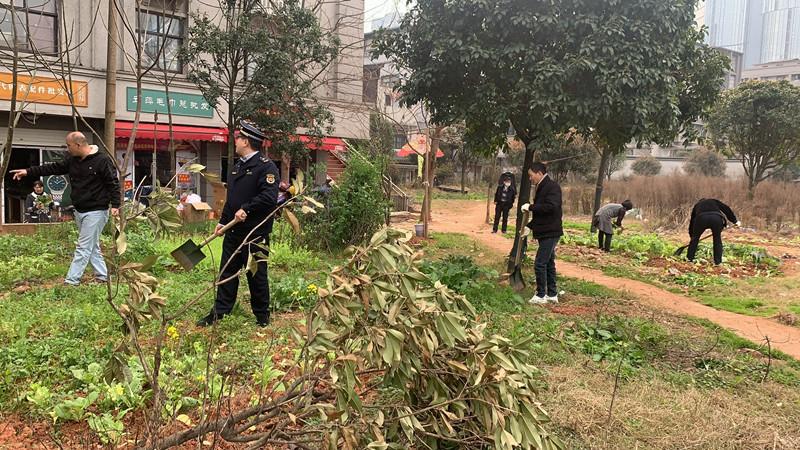 """绿化带变菜地?长沙太平街社区开展""""毁绿种菜""""专项整治行动"""