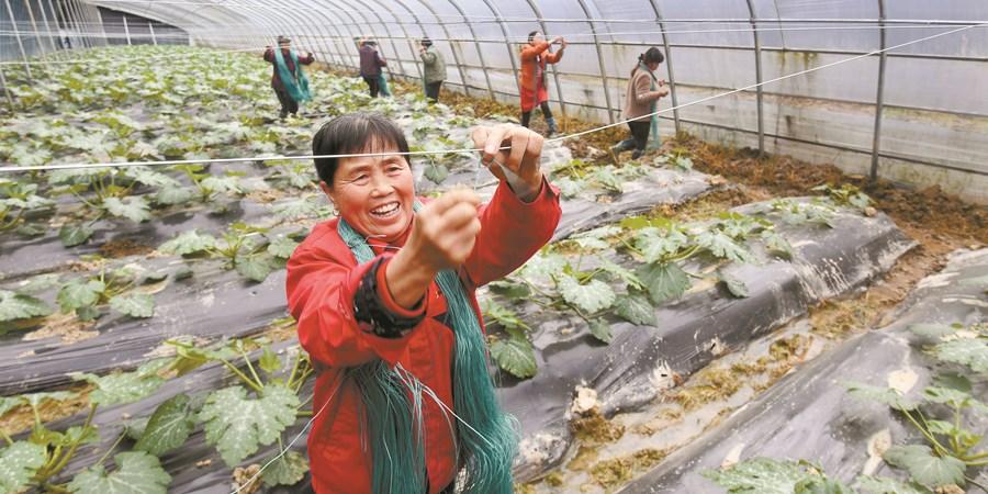 蔬菜产业 助民增收