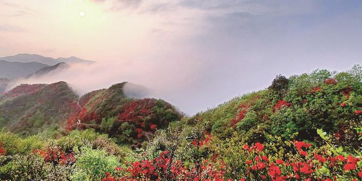 高山杜鹃红