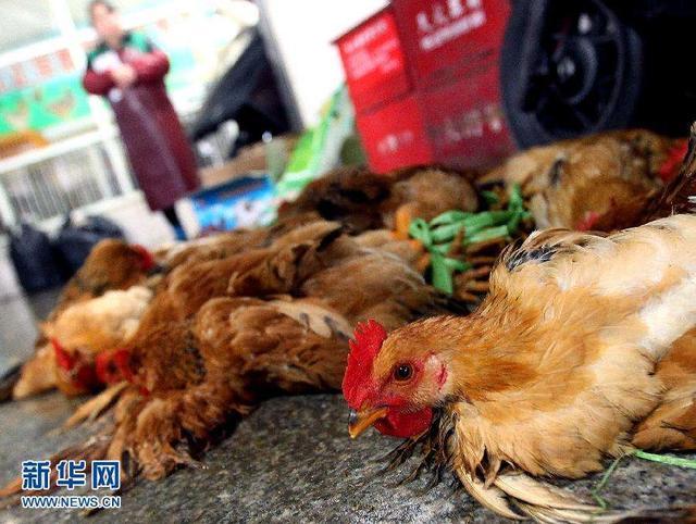 积极推进家禽和牛羊集中屠宰!湖南出台文件引导支持相应城区淘汰活禽交易