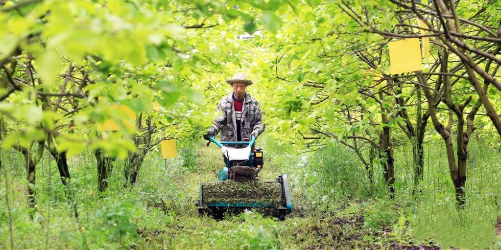 谷雨将至农事忙