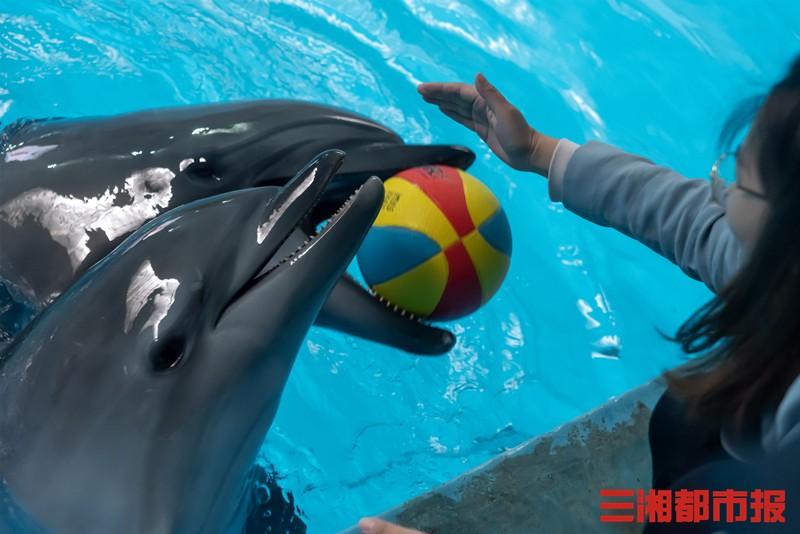 请你来取名!长沙海底世界海豚宝宝周岁啦