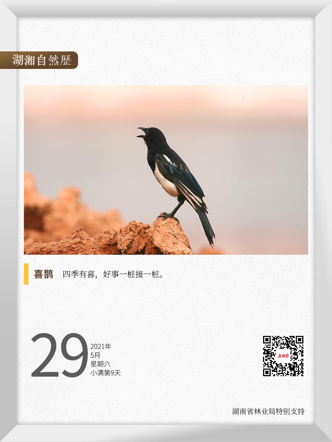 """湖湘自然历丨""""喳喳"""",今天有好事发生"""