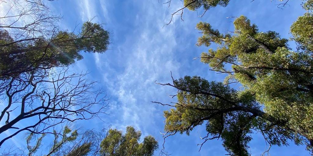 山火后一年走进澳大利亚受灾林区