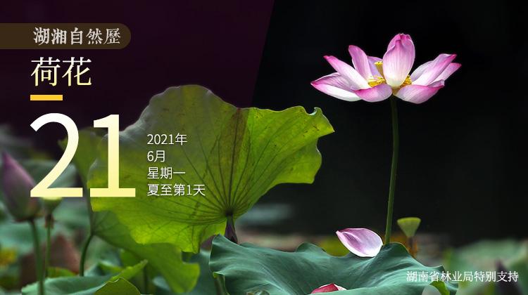 湖湘自然历丨夏花灿烂㉑外表高冷内心火热,说的竟是它
