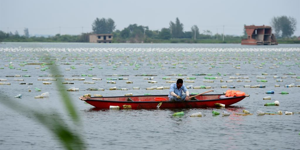 安徽颍上:珍珠养殖助力乡村振兴