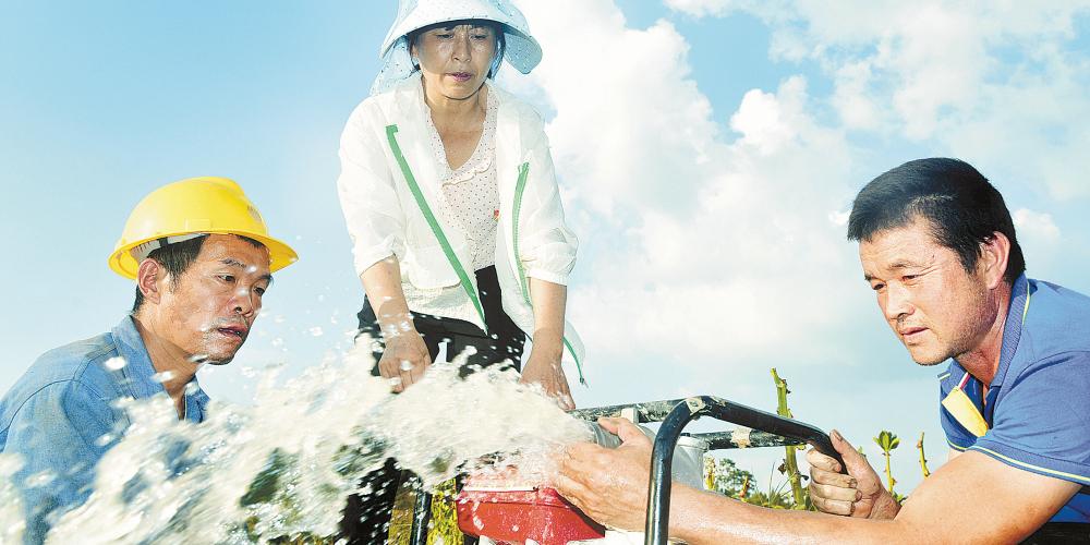 党员干部助农抗旱保苗