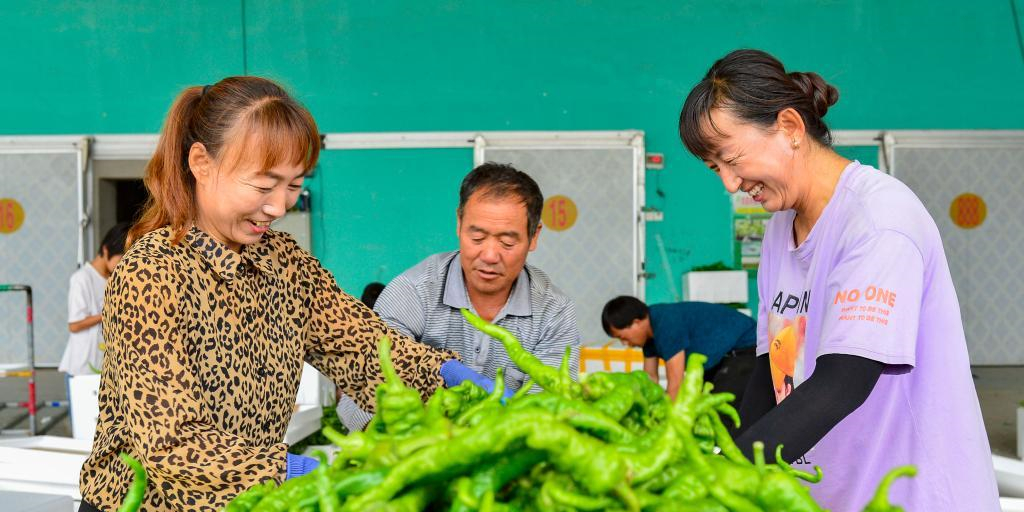 鄂尔多斯:小辣椒大市场