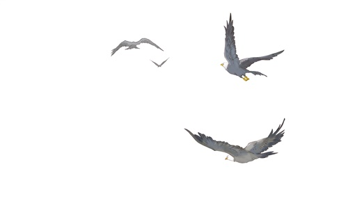 用心飞扬的山鹰