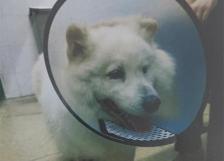 大狗遭小狗偷袭受伤,宠主起诉索赔