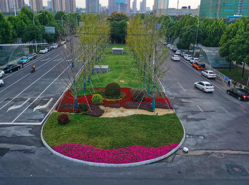 美!900余万盆花卉扮靓长沙街头