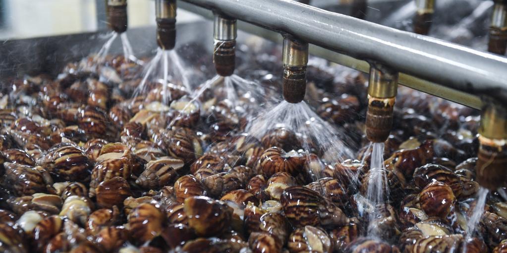 蜗牛养殖助力乡村共同富裕