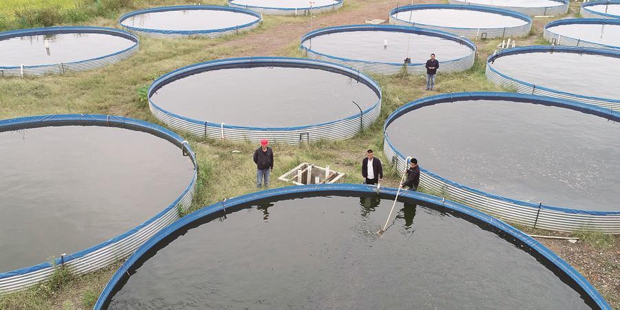 鱼苗养殖规模化