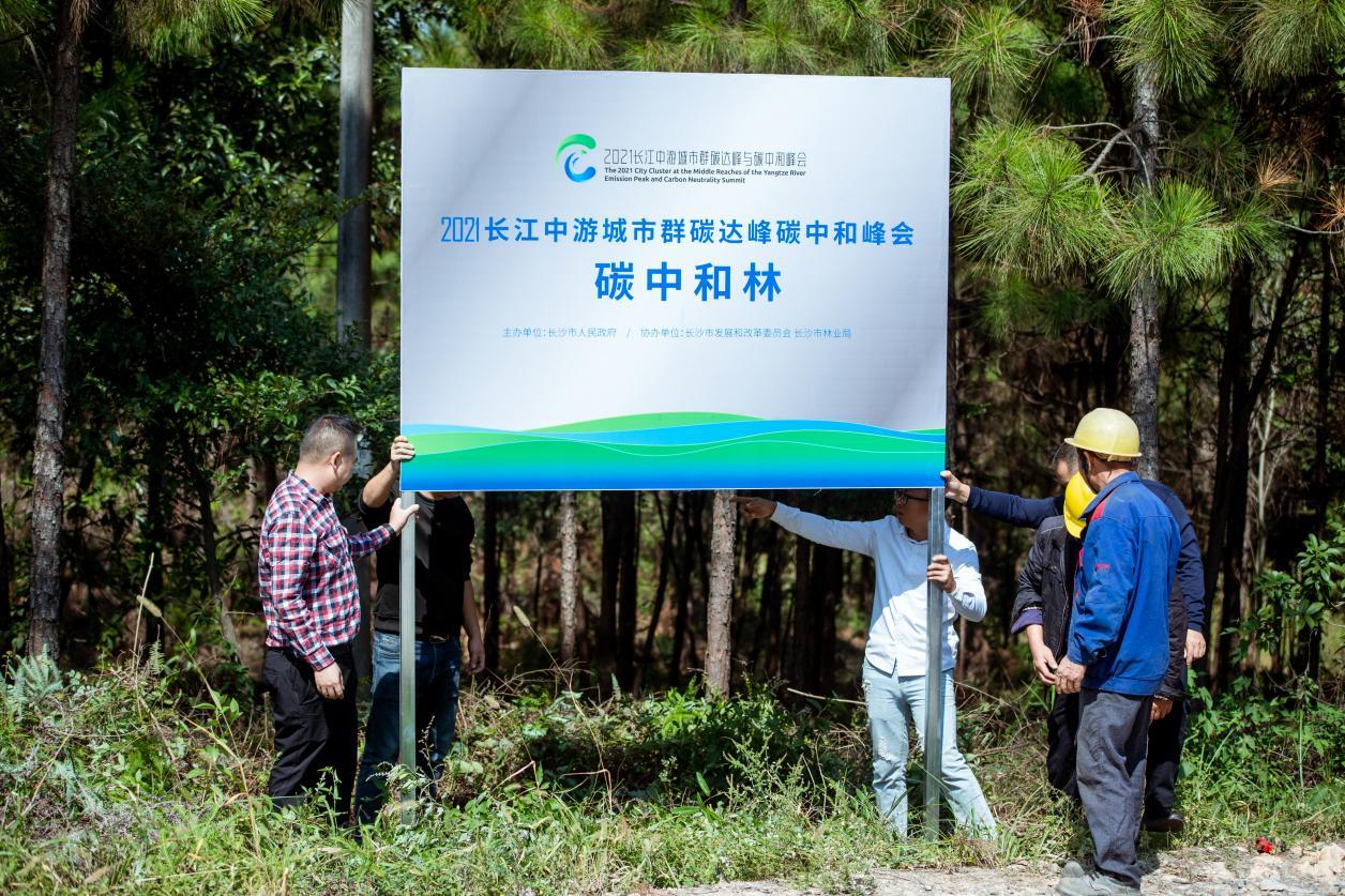 """长江中游城市群共同认领105亩""""碳中和林"""""""