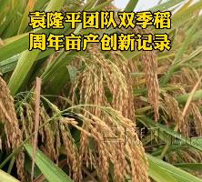 1603.9公斤!袁隆平团队双季稻周年亩产创新记录