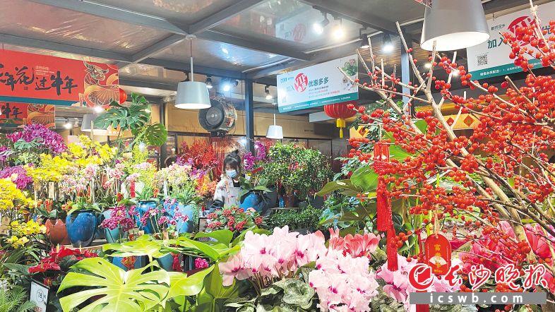 就地过年陆续升温年宵花市场:长沙花市货源富饶 整体代价小幅上扬