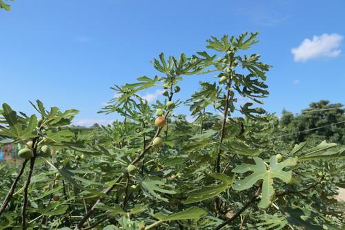 湖湘自然历丨在春天,种一棵树⑪道是无花却有花 新湖南www.hunanabc.com