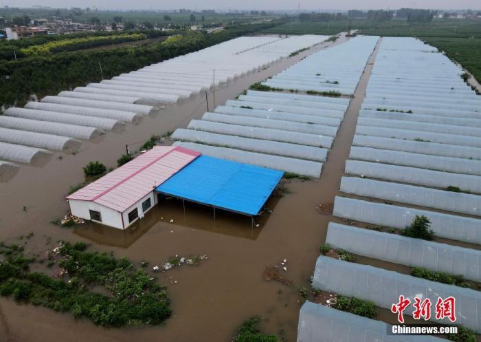 资料图:被淹的大棚。 <a target='_blank' href='http://www.chinanews.com/'>中新社</a>记者 邹浩 摄